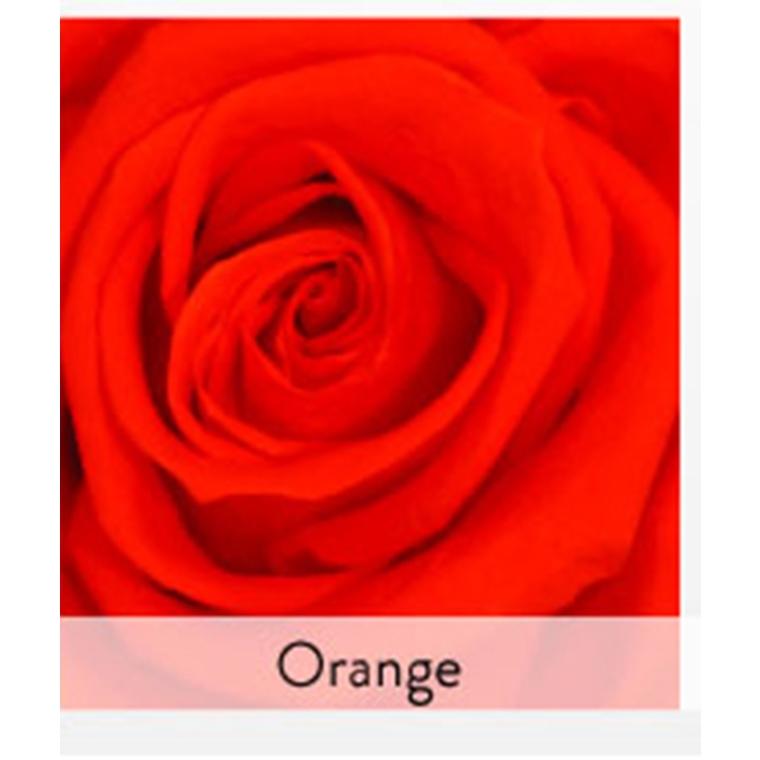 Rose stabilisée standard orange Ø 4 x H 50 cm 257569