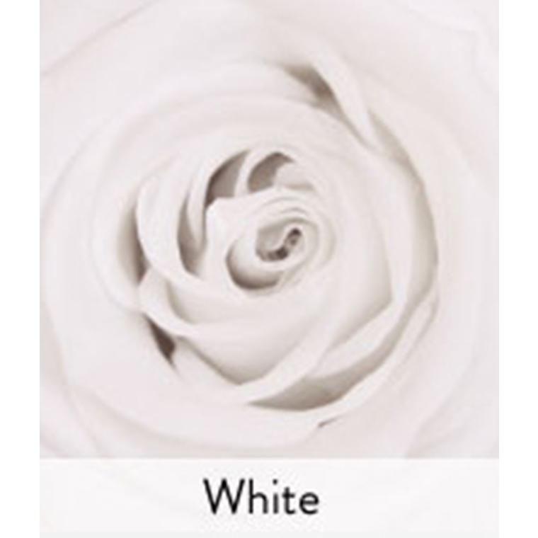 Rose stabilisée standard blanche Ø 4 x H 50 cm 257571