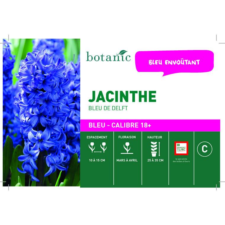 Bulbe jacinthe bleue de delft en vrac botanic® 258073