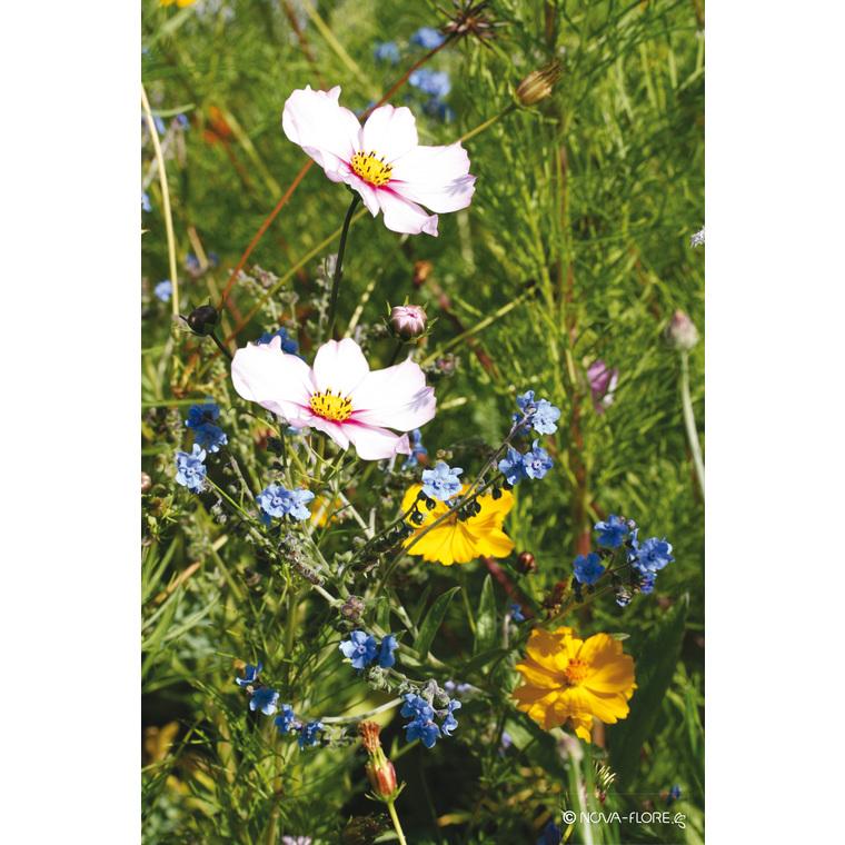 Fleurs mellifères plein soleil 260141
