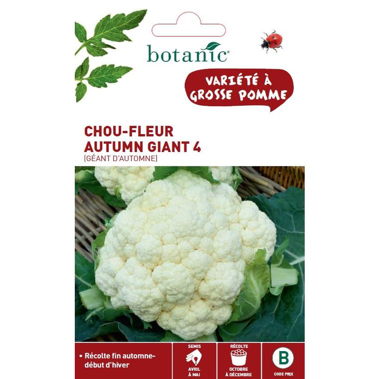Chou-Fleur Géant d'Automne Primus 261152