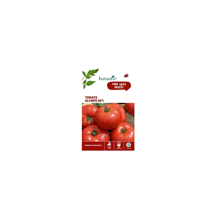 Tomate Olympe HF1 261267