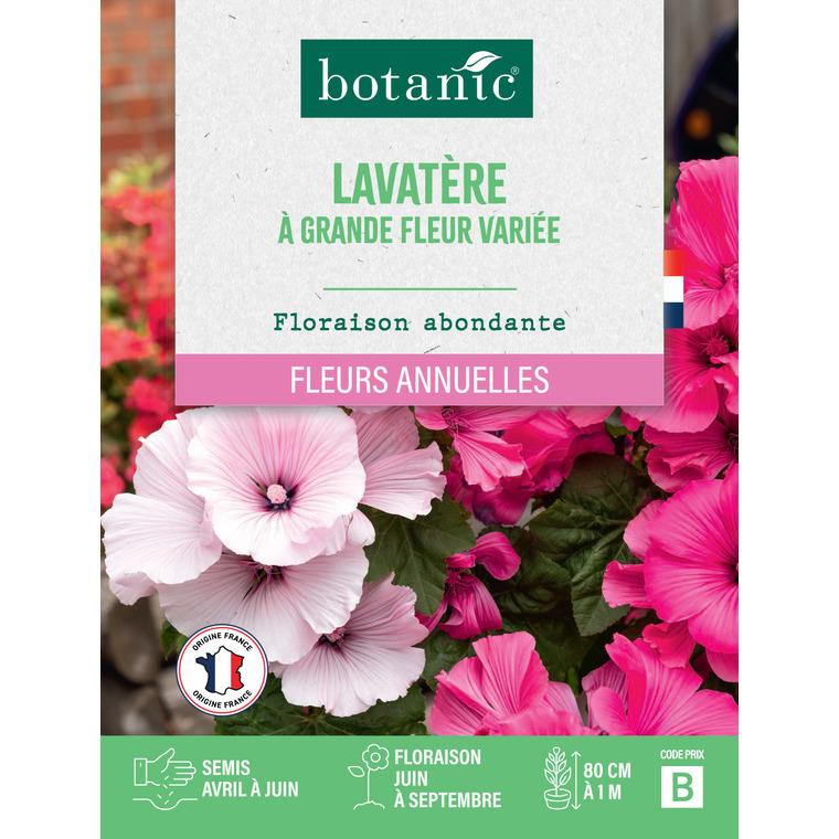 Lavatère à grande fleur variée en sachet 261329