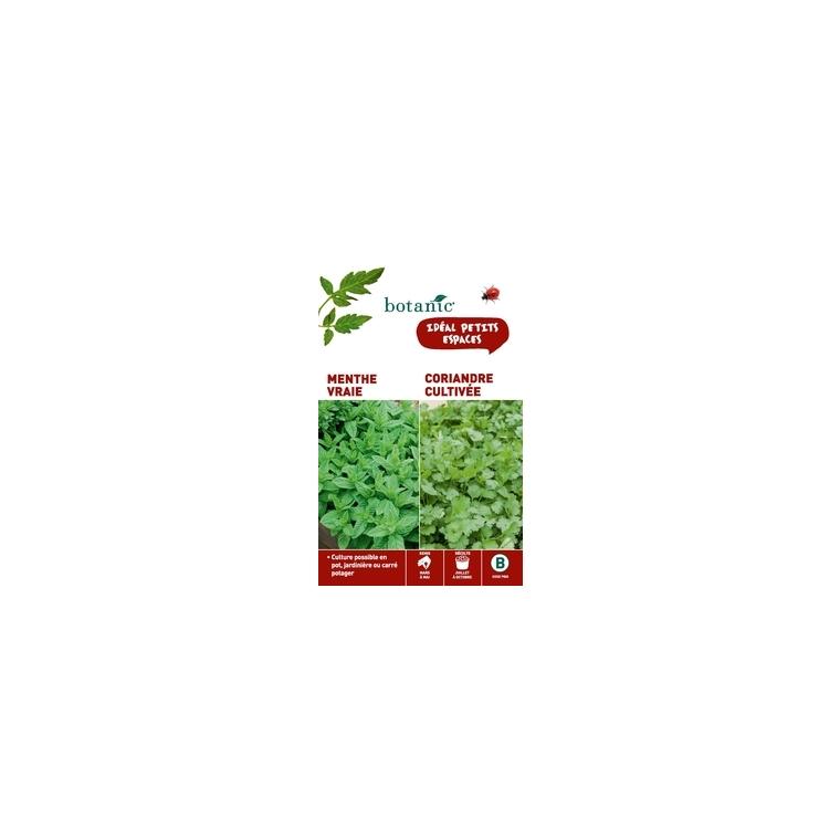 Menthe vraie + coriandre cultivee Duo aromatique 261345