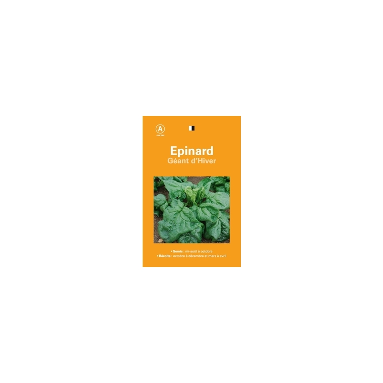 Epinard geant hiver 261522