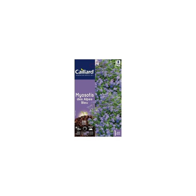 Myosotis des Alpes Bleu en sachet 263132