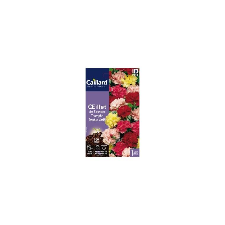 Œillet des fleuristes Triomphe double varié en sachet 263141