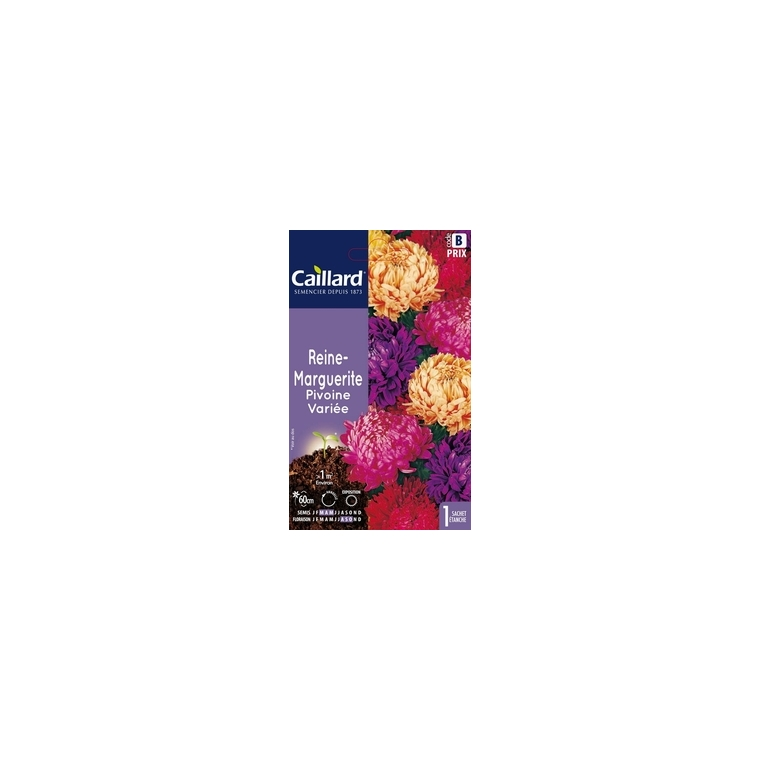 Reine-marguerite pivoine variée en sachet 263176