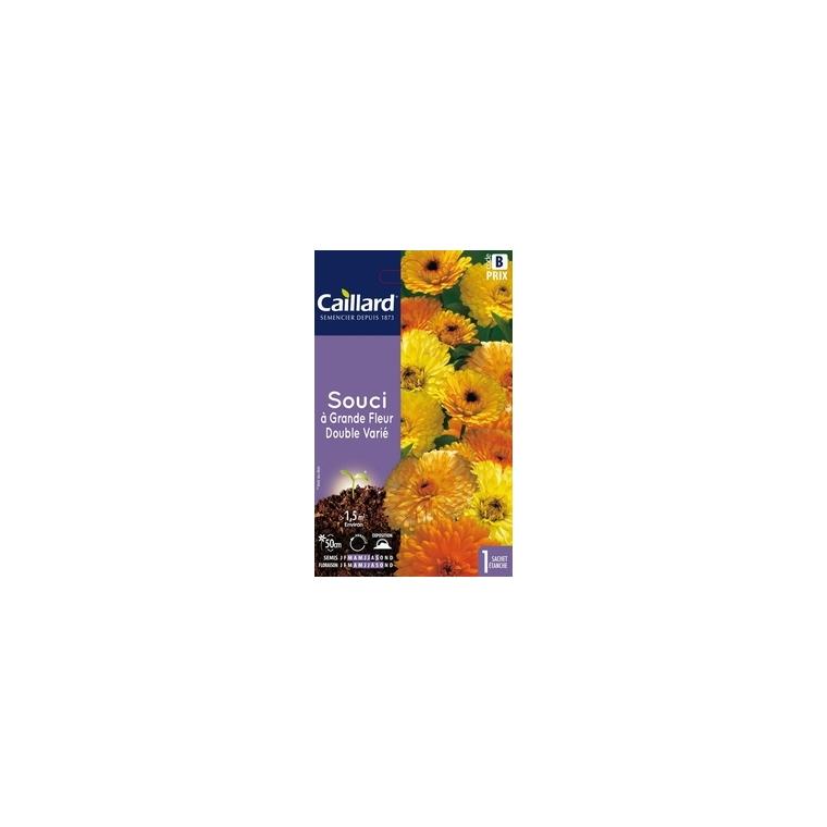 Souci à grande fleur double varié en sachet 263201