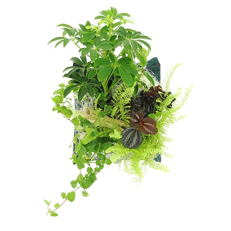 Poche plantée Toucan pour cadre végétal 4 plantes 264264