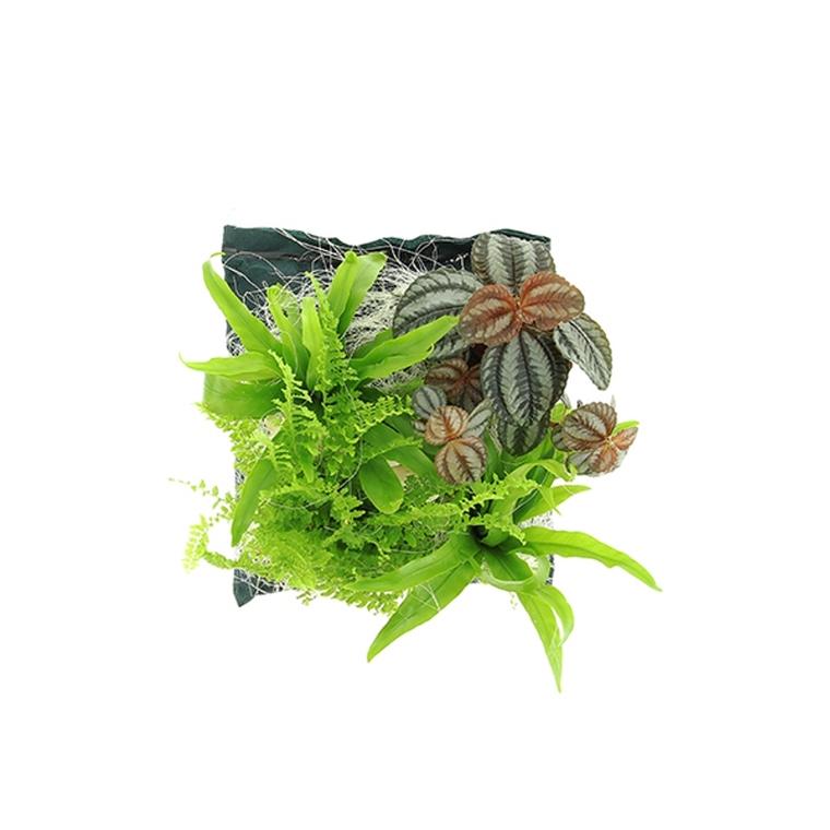 Poche plantée Fidji pour cadre végétal 4 plantes 264265