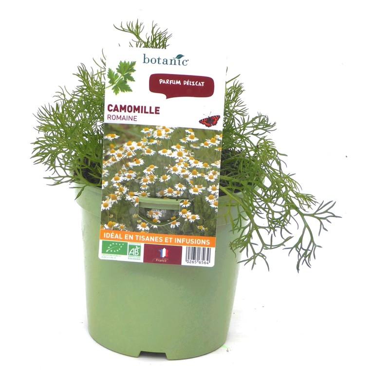 Camomille. Le pot de 1 litre recyclé 265656