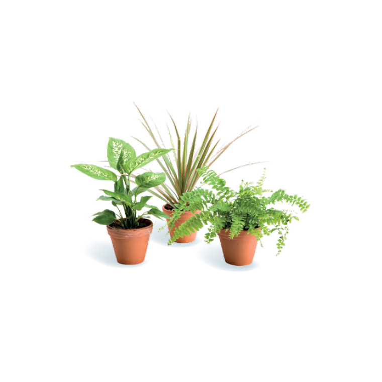 Plante coupe plantes vertes maison botanic for Soldes plantes vertes