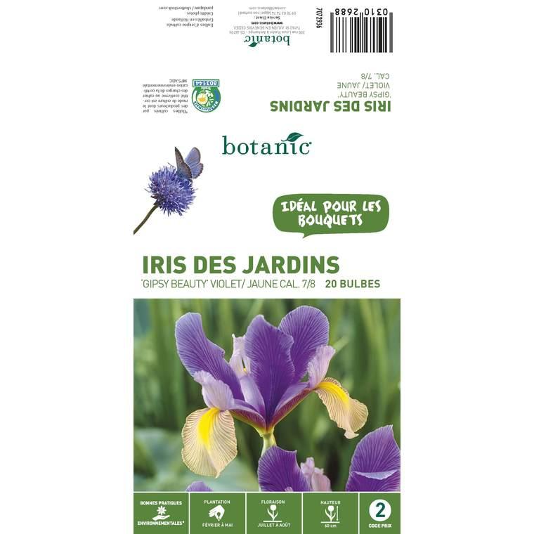 20 bulbes d'Iris Hollandica Gipsy Beauty – Violet Jaune