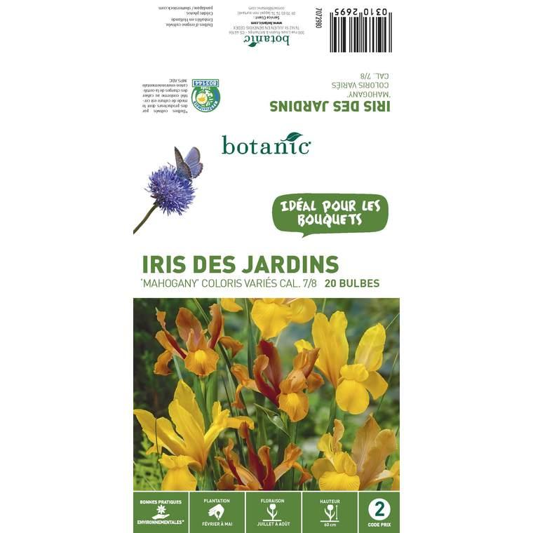 20 bulbes d'Iris Hollandica Mahogany – Couleurs variées