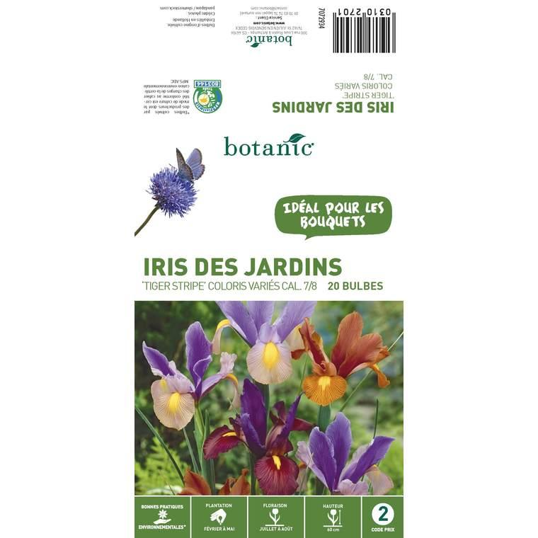 20 bulbes d'Iris Hollandica Tiger Stripe Mélange – Couleurs Variées