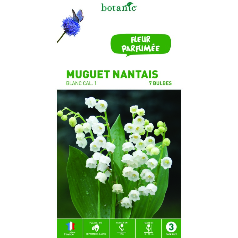 Muguet nantais blanc – 7 bulbes calibre 1