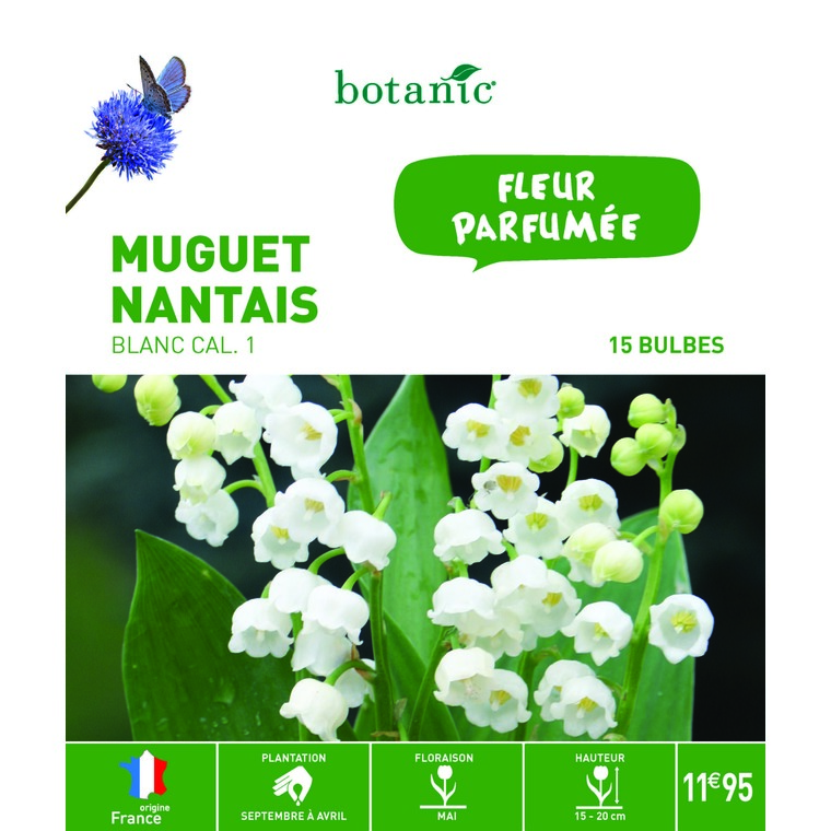 Muguet nantais blanc – 15 bulbes calibre 1