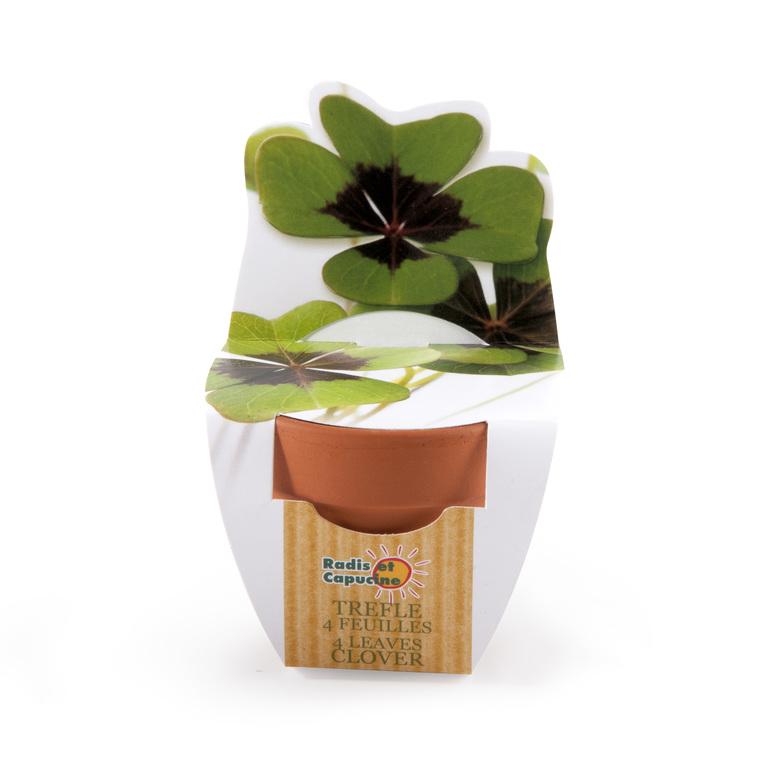 Mini kit plantation trèfle