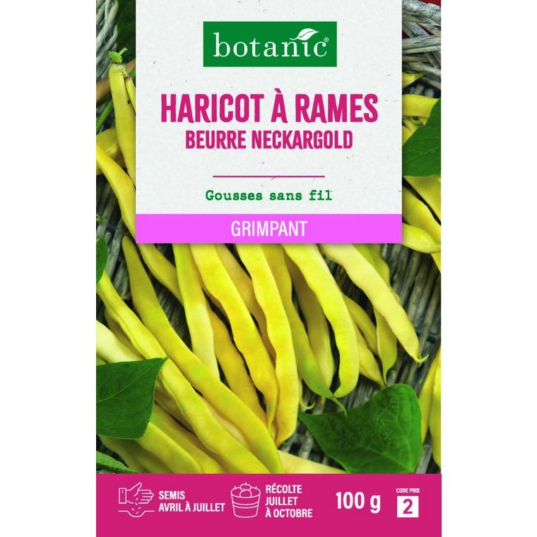 Semences pour haricot à rames de la variété neckargold 100 g - 2 m