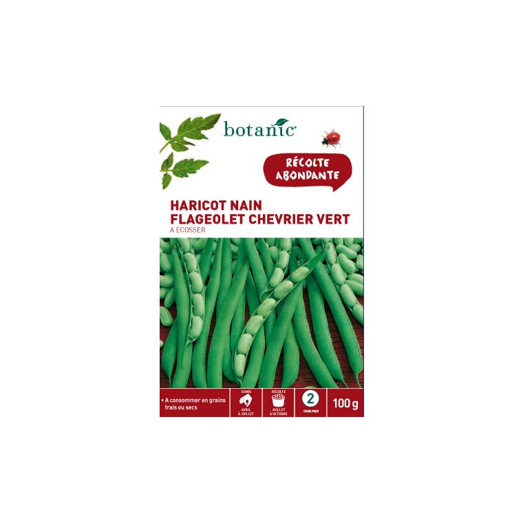 Semences pour flageolet de la variété chevrier vert 100 g - 2 m