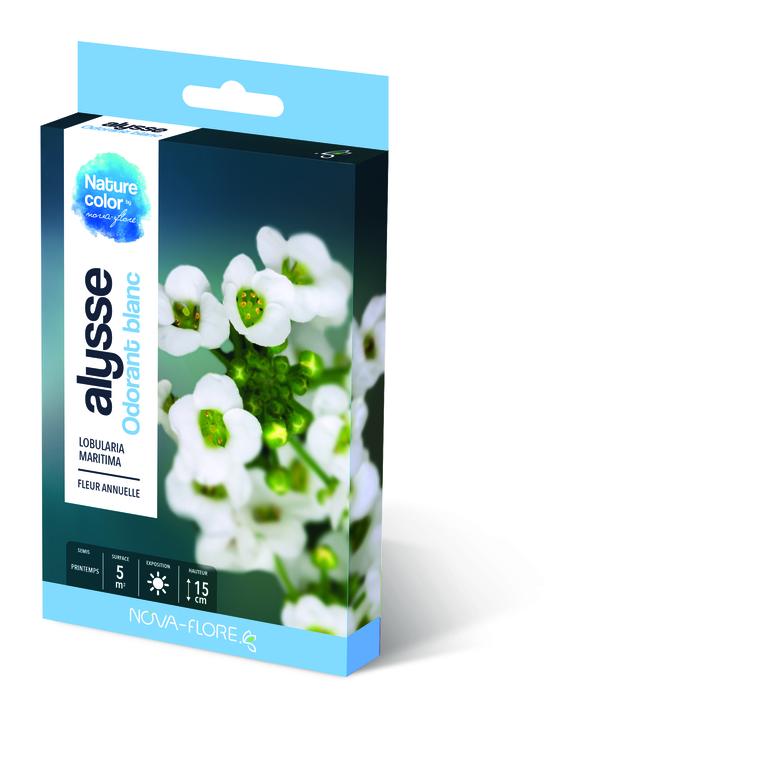 Semences pour alysse odorant blanc – 5 m2