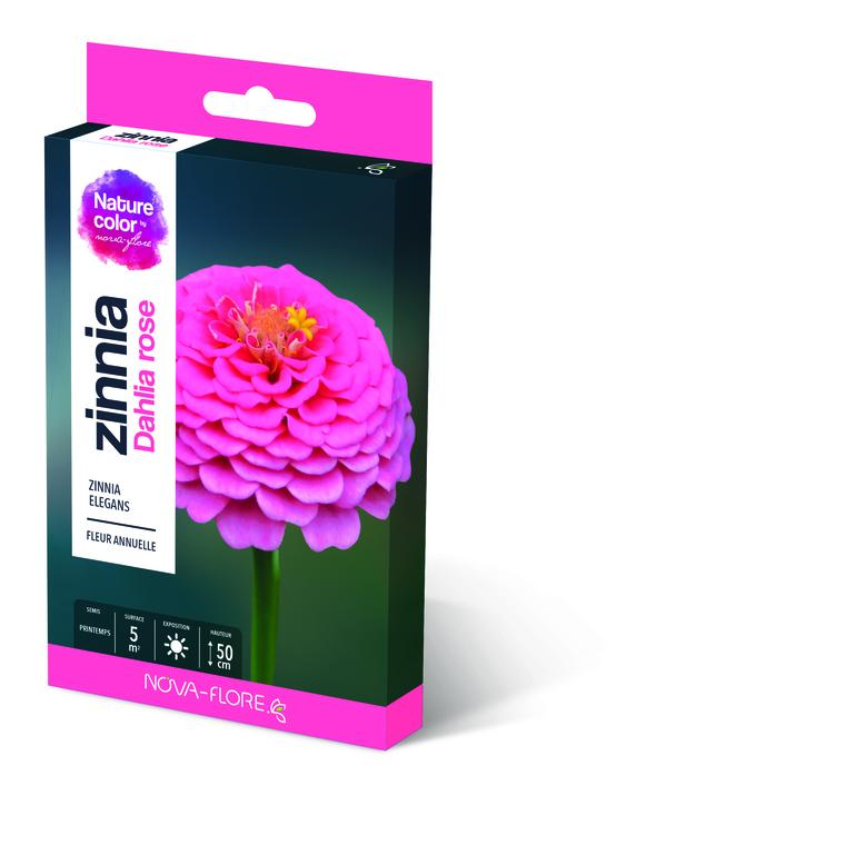 Semences pour zinnia dahlia rose – 5 m2