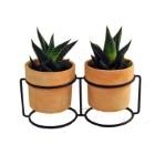 Duo de succulentes en pot