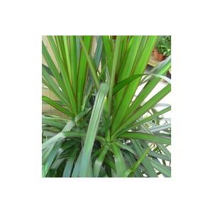 Plantes vertes plantes et fleurs d 39 int rieur et maison for Plante verte maison