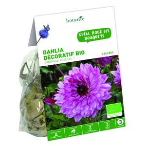 2 bulbes de Dahlia Décoratif Gabrielle BIO – Rose
