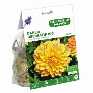 2 bulbes de Dahlia Décoratif Lake Ontario BIO – Jaune