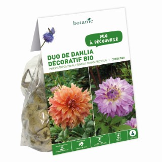 Duo Dahlia Décoratifs Philip Campos/Rir Alf. Ramsay BIO – Orange/Rose