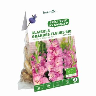 6 bulbes de Glaïeul Grande Fleur Hybride Majestic BIO - Rose