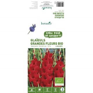 6 bulbes de Glaïeul Grande Fleur Hybride Mascagni BIO - Rouge 310200