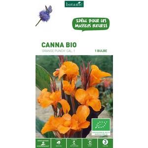 Canna Orange Punch BIO - Orange
