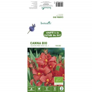 Canna Salmon Pink BIO – Rose Saumon 310208
