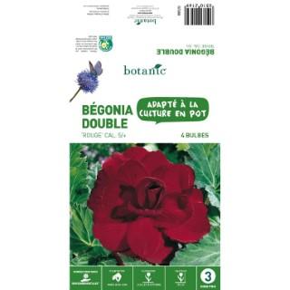 4 bulbes de Bégonia double rouge 310216