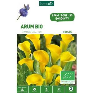 Bulbe d'Arum mimosa BIO – Rose clair