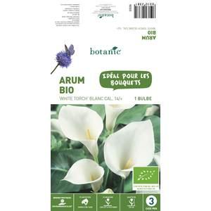 Bulbe d'Arum White Torch BIO - Blanc