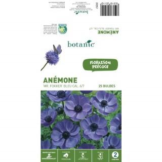 25 Bulbes d'Anémone Mr Folker - Bleu 310251