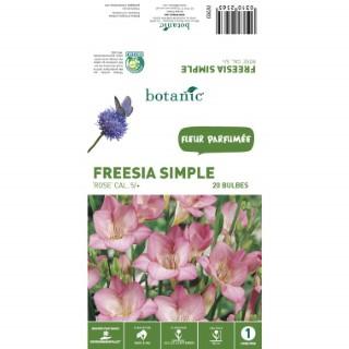 20 bulbes de Freesia Simple - Rose 310256