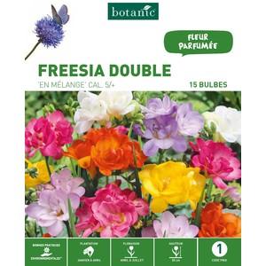 20 bulbes de Freesia Double Mélange – Couleurs variées 310258