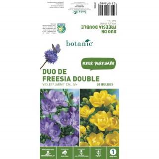 20 bulbes de Duo de Freesia Double – Violet/Jaune 310260