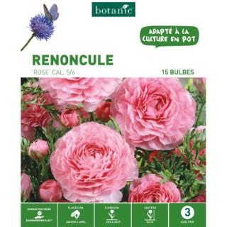 20 bulbes de Renoncule Rose 310261