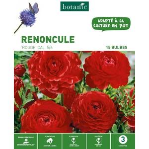 20 bulbes de Renoncule Orange – Coloris rouge 310262