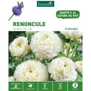 20 bulbes de Renoncule Blanc 310263