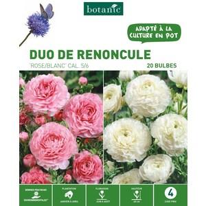 25 bulbes de Duo de Renoncule Rose/Blanc 310266