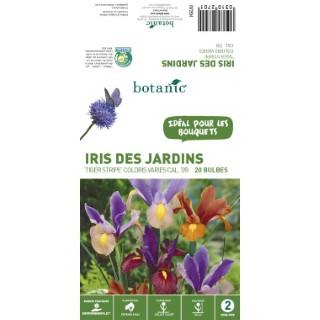 20 bulbes d'Iris Hollandica Tiger Stripe Mélange – Couleurs Variées 310270