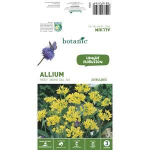 20 bulbes d'Allium Molly - Jaune 310274