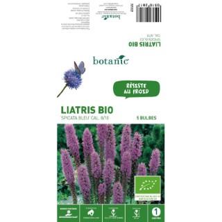 5 bulbes de Liatris Spicata Bleu BIO 310281